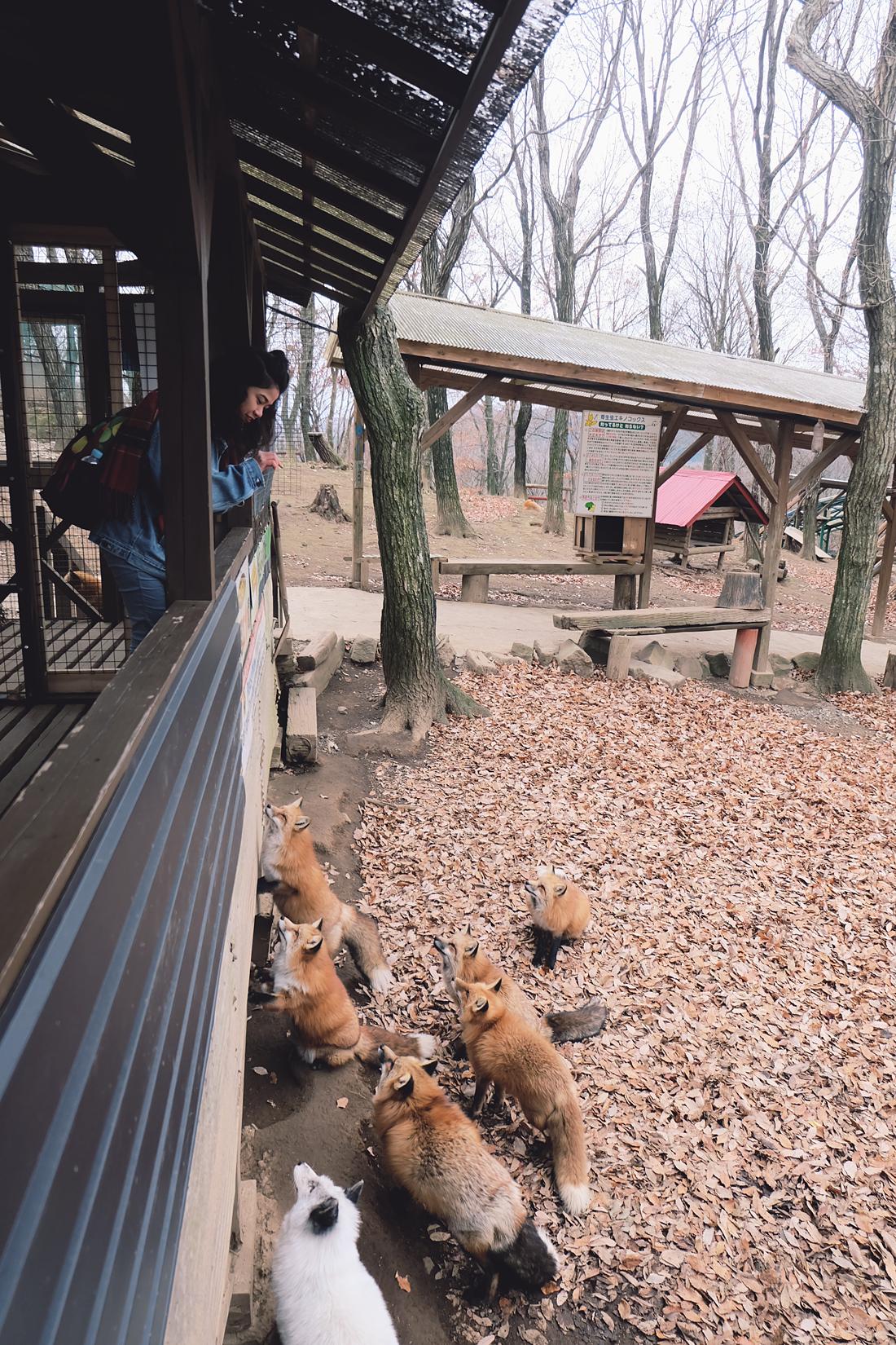 miyagi-zao-fox-village-rainbowholic-64